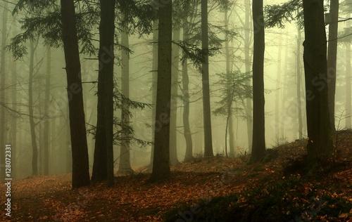 Obraz Leśne klimaty - fototapety do salonu