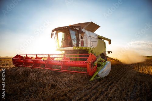 Fotografiet Combine harvesting wheat