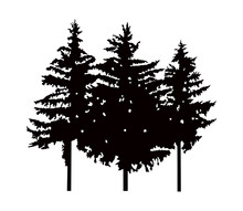 Image Silhouette Of Three Pine...