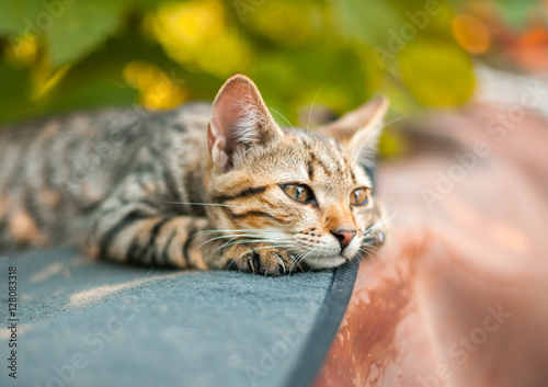 Papiers peints Chat Cute kitten relaxing in the garden
