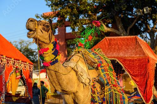 Decorated camel at Pushkar Fair