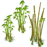 Bamboo on white background. Vector isolated