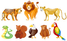 Set Of Different Wild Animals