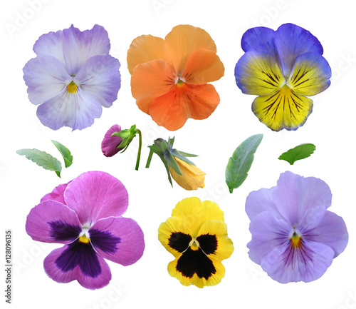 Papiers peints Pansies Set of pansies on a white background.