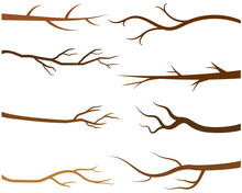 Brown Tree Branches Without Leaves
