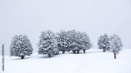 Snowy trees in Barbagia, Sardinia, Italy