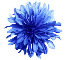 Blue Flower On A White  Backgr...