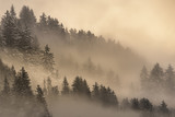 Fototapeta Las - Pine forest in fog at sunrise, Bolzano, Italy