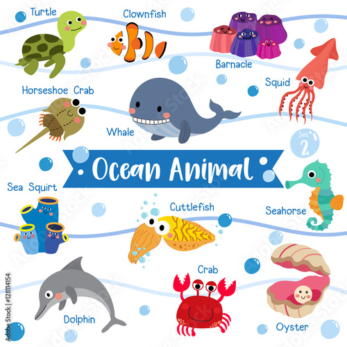 Ocean Animal cartoon on white background with animal name Poster