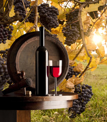 Fototapetastill life with red wine on vineyard background