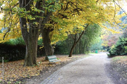 Foto op Canvas Herfst Autumn scene in a park in Rome