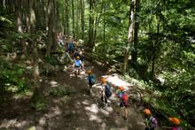 School Children In Forest