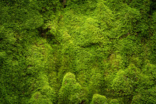 Grooved Green Moss Background ...