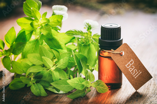 Fotografia  Fresh basil and oil on wooden background