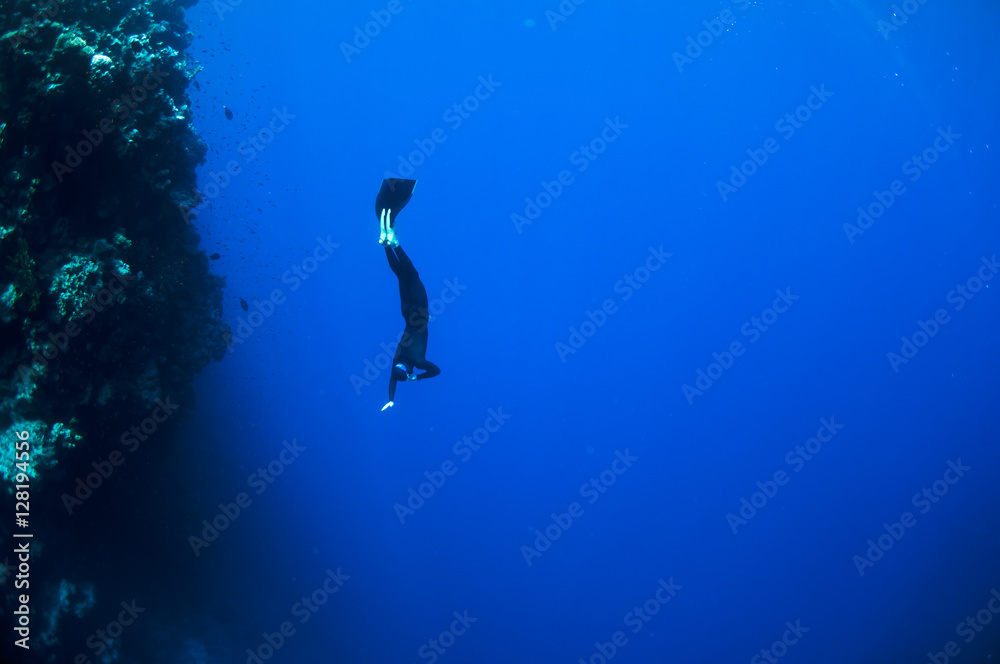 Fototapety, obrazy: Freediver moves underwater along coral reef