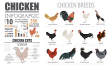 Poultry Farming Infographic Te...