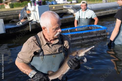 senior fish farm caring esturgeon Fototapeta
