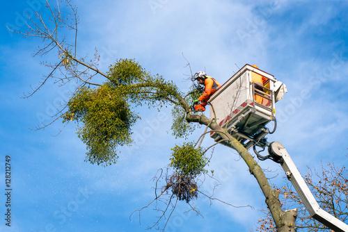 Baum fällen mit dem Hubsteiger Wallpaper Mural