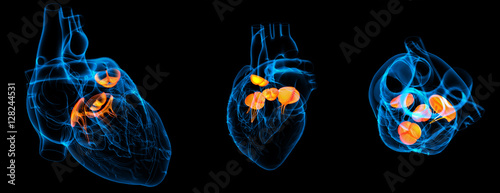Photo  3d render illustration of the  Heart valve