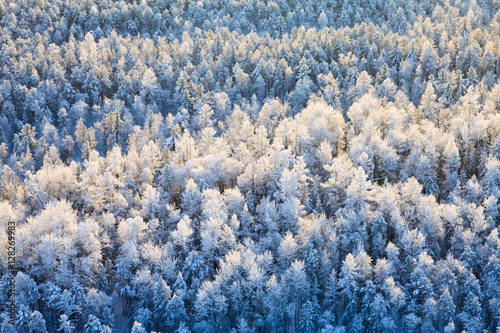 Top view of winter forest Wallpaper Mural