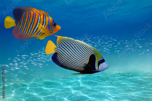 Fotobehang Onder water Coral Reef and Tropical Fish in the Red Sea