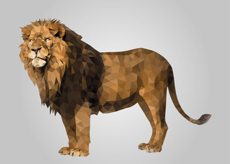 Lion standing and looking low poly vector