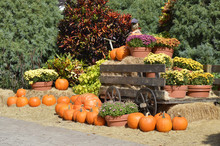 Pumpkins Around Am Old Farm Wagon