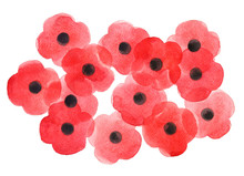 Watercolor Poppy Flower, Remembrance Day White Background