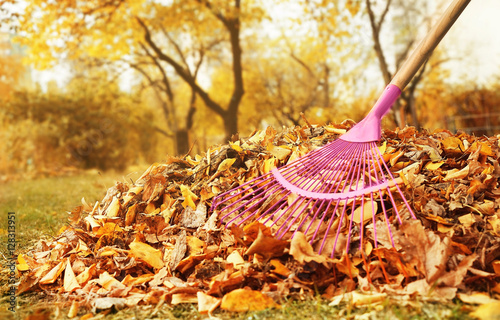 Fotografía Fan rake and pile of fallen leaves in autumn park, close up view