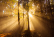 sonnenstrahlen im laubwald