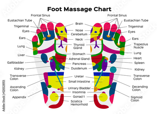 stock vector illustration: foot reflexology chart with accurate description  of the corresponding internal organs and body parts