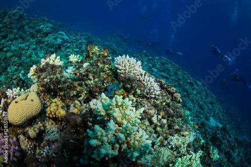Foto op Aluminium Onder water Divers on the reaf