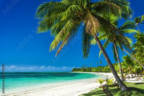 Fotografia  Palm trees on a white sandy beach at Plantation Island, Fiji