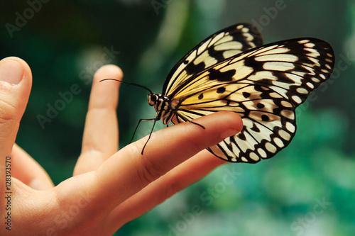 Plakat Piękny motyl na zewnątrz