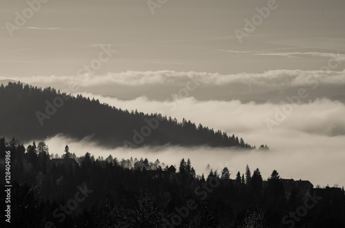 Poster Morning with fog Morning mists in Pieniny mountains, Poland