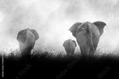 einzelne bedruckte Lamellen - Beautiful Silhouette of African Elephants at Sunset (von Katrina Brown)