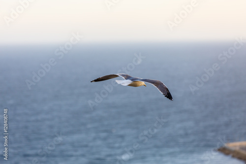 Foto op Canvas Luchtsport Seagull flying on sky background with clouds