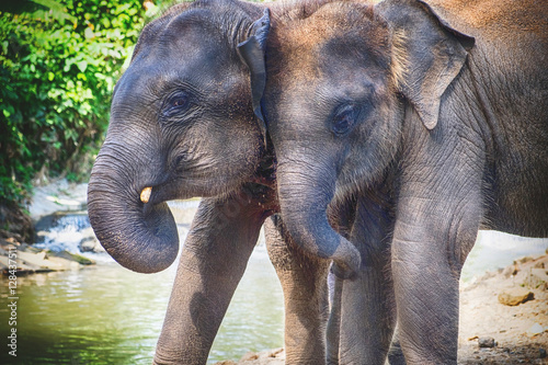 Photo Stands Elephant Baby asia elephant in Maesa, Chiangmai Thailand