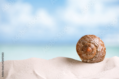 nice sea  shell on white Florida beach sand under the sun light Wallpaper Mural