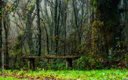 Banco en el bosque bajo un abeto
