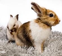 Christmas Rabbit With A Christmas Tree And Present