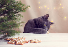 New Year Cookie Thief/ Furry C...