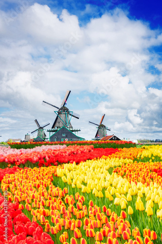 Poster Amsterdam traditional Dutch scenery with windmill of Zaanse Schans at spring with tulips, Netherlands