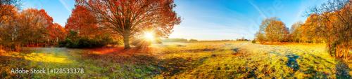 Canvas Prints Honey Panorama Landschaft mit Wald und Wiese im Herbst