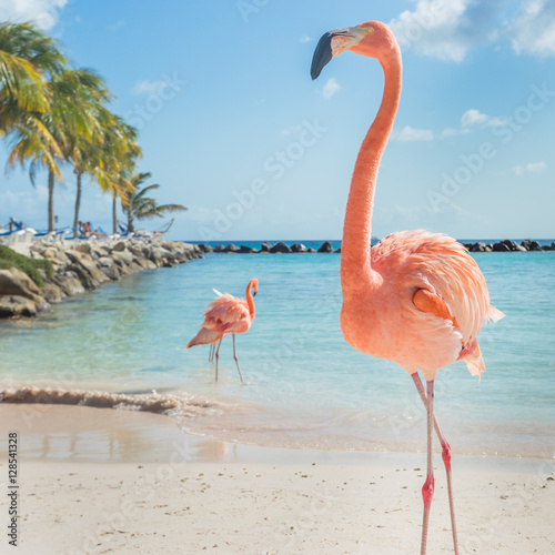 Poster de jardin Flamingo Three flamingos on the beach