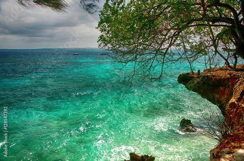 Scogliera con albero a Prison Island - Zanzibar