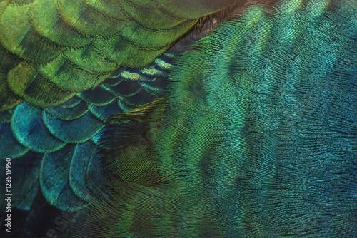 Foto op Aluminium Pauw close-up peacock feathers