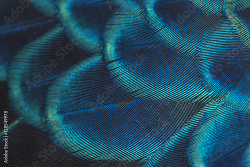 Aluminium Prints Textures close-up peacock feathers