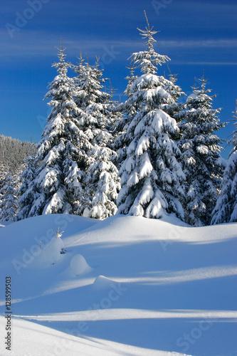 Obraz na plátně  Tief verschneite unberührte Winterlandschaft, schneebedeckte Tannen, funkelnde S