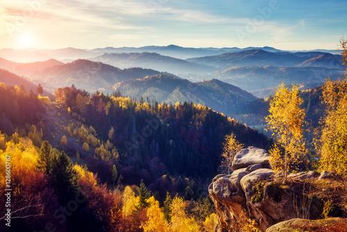 majestatyczny-kolorowy-las